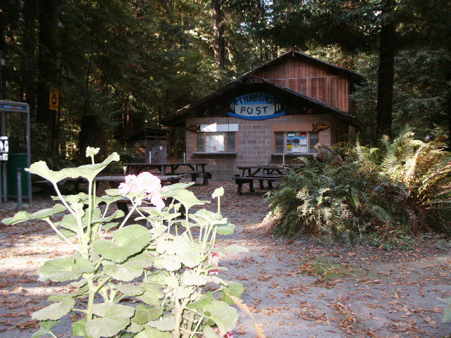 Camping Com Gualala River Redwood Park Information For
