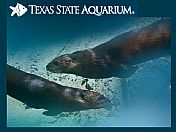 Fish and sea creatures at Texas State Aquarium