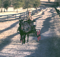 Out for a Buggy Ride