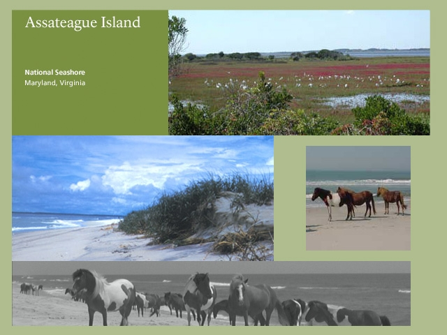Assateague island state park reservations pictures to pin for Cabins near assateague island